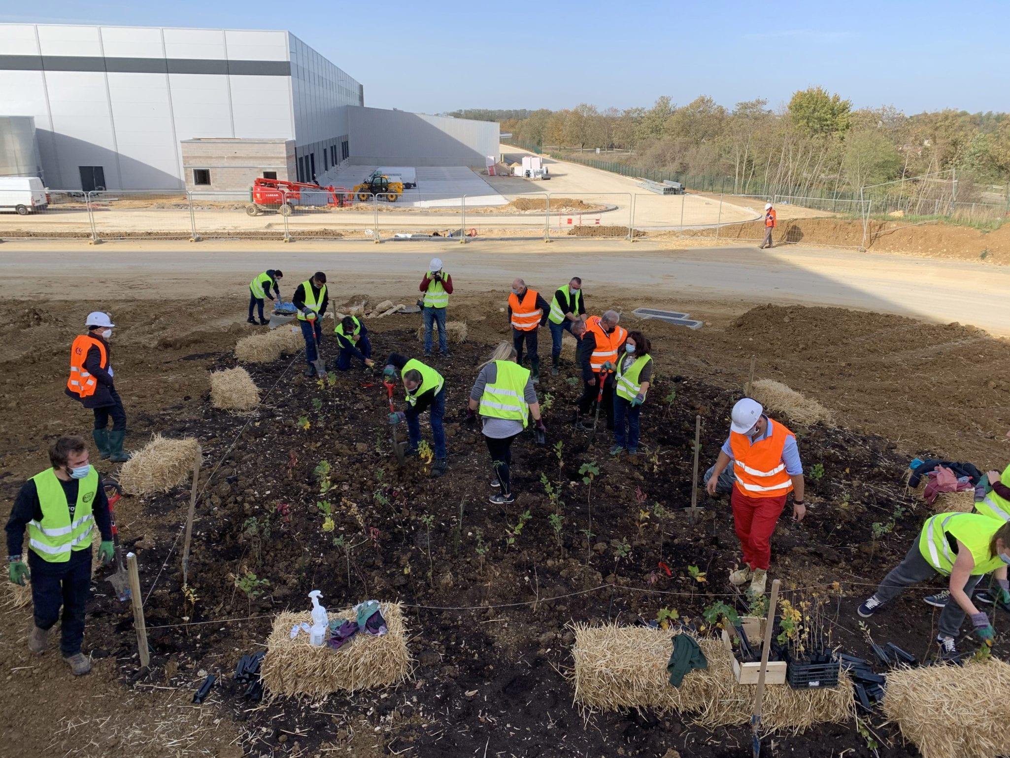 Plantation d'une mini-foret urbaine sur le chantier de la plateforme logistique pour Alderan